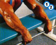 fitness-oefening reverse wrist curl-1